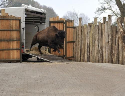 Tierpark Nordhorn gibt Wappentiere an den Zoo Osnabrück