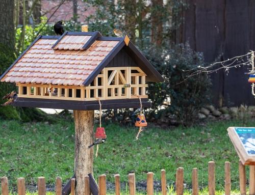 Ganzjahresfütterung von Wildvögeln im Tierpark Nordhorn