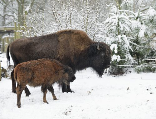 Zootiere und Wildtiere im Winterschlafmodus?